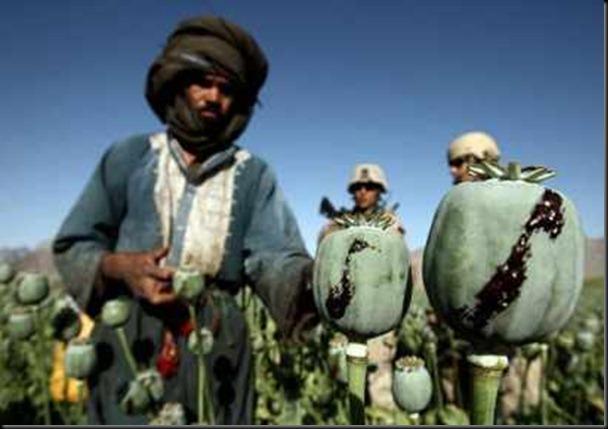 USMilPoppyFieldsAfghanistan4.jpg.JPG