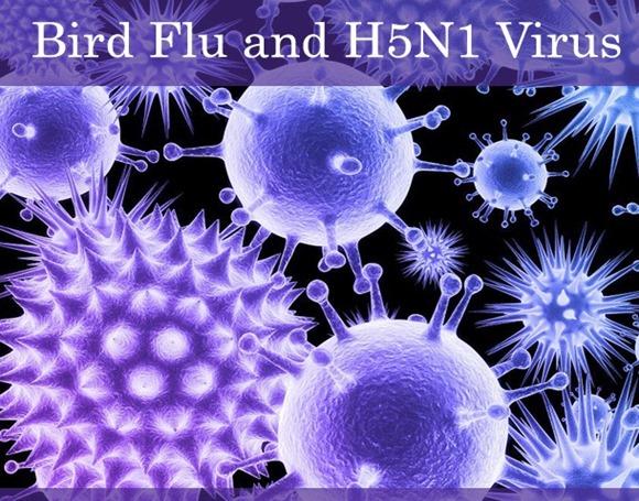 H5N1virus