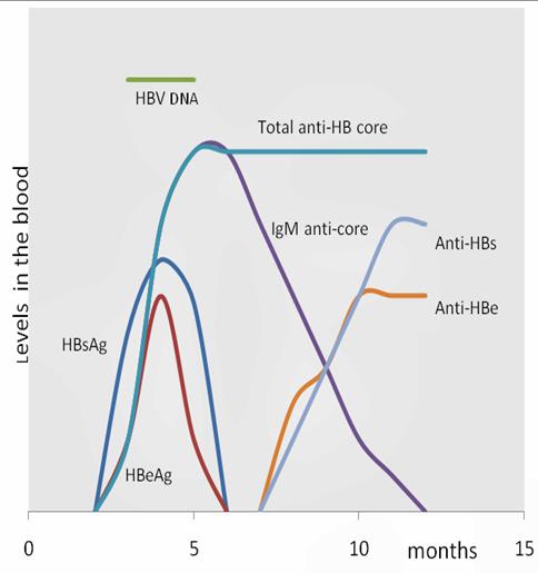 HBV_serum_markers