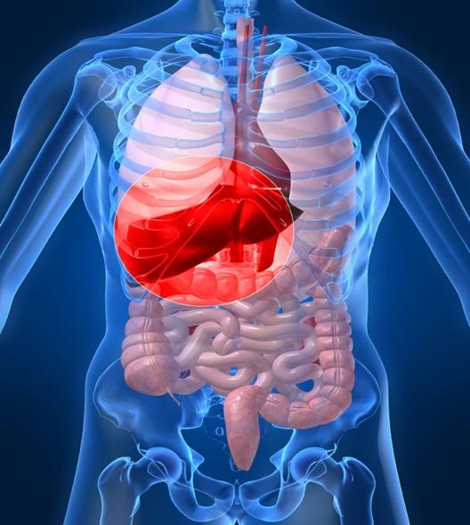 Hepatitis-skeleton-iStock4406779